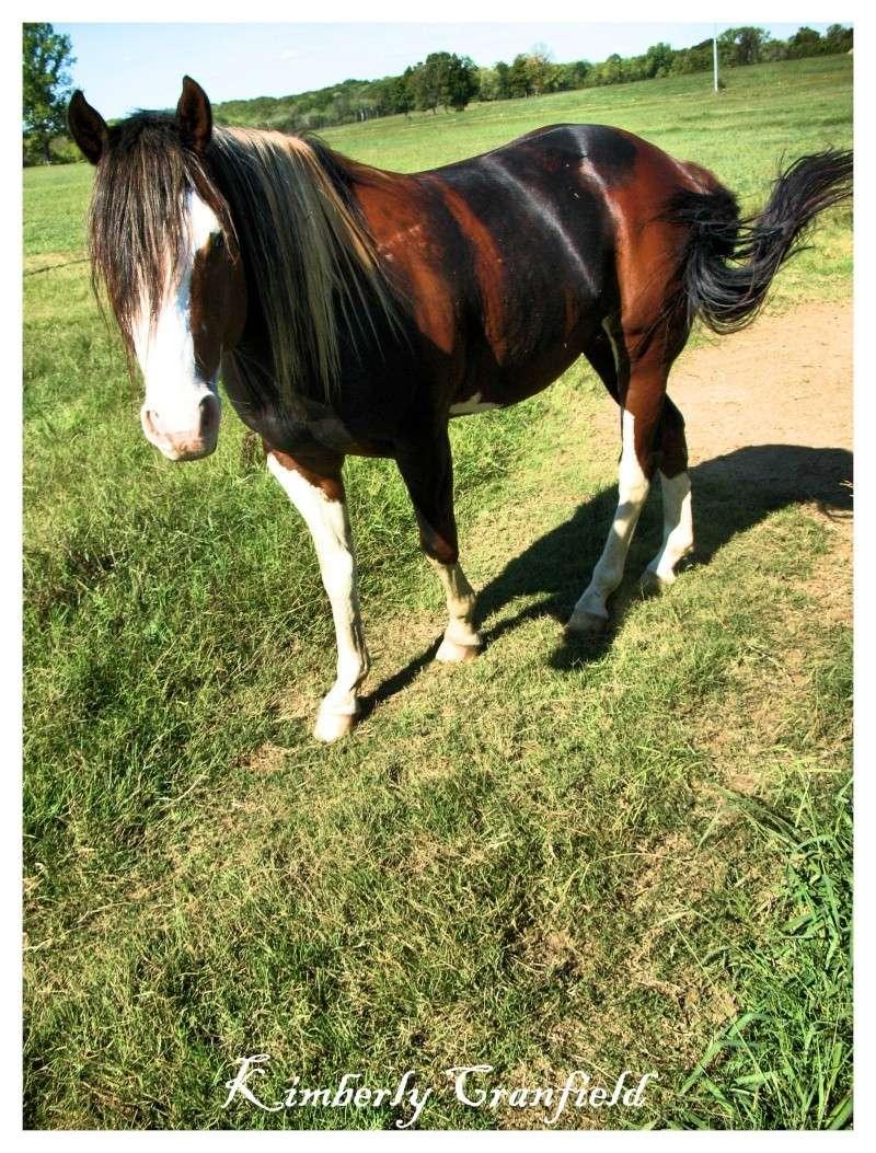 Customs d'Huvea Horse_10