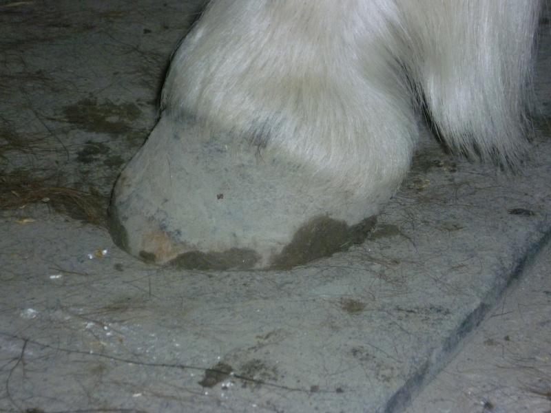 Les pieds-pieds a Tam-Tam^^photos P1010740