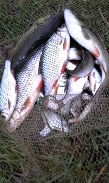 2 parties de pêche à l'arrache 016_co11