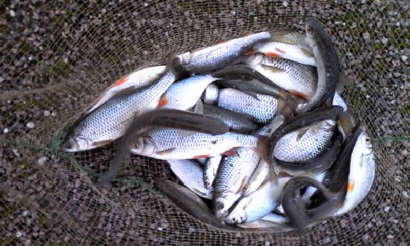 2 parties de pêche à l'arrache 017_co11