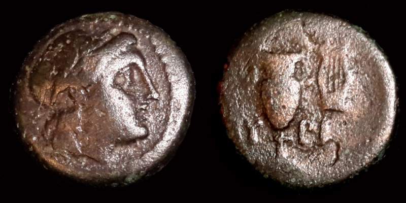Myrina identification 175410