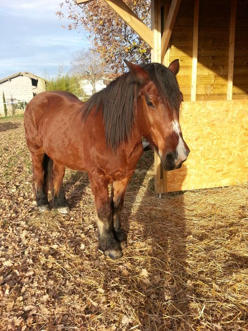 BILLY - ONC Trait né en 1992 - adopté en octobre 2015 par Patricia - Page 2 20151215