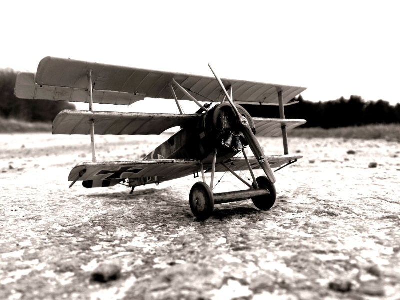 Fokker Dr.I 556/17 – Jasta 6 – Mars 1918 1/48 (+ dio) Dscn2910