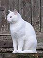 Couleurs des robes de chats 90px-g10