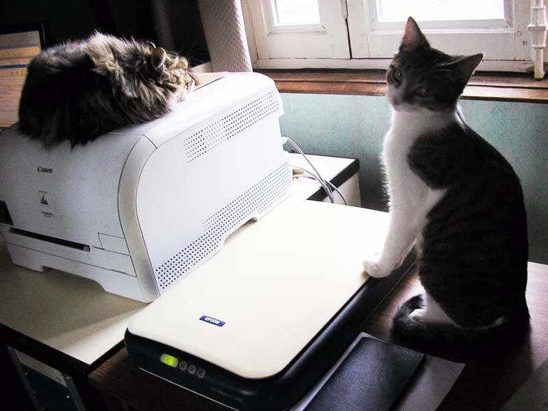 Une maison pour une petite chatte Chats_10