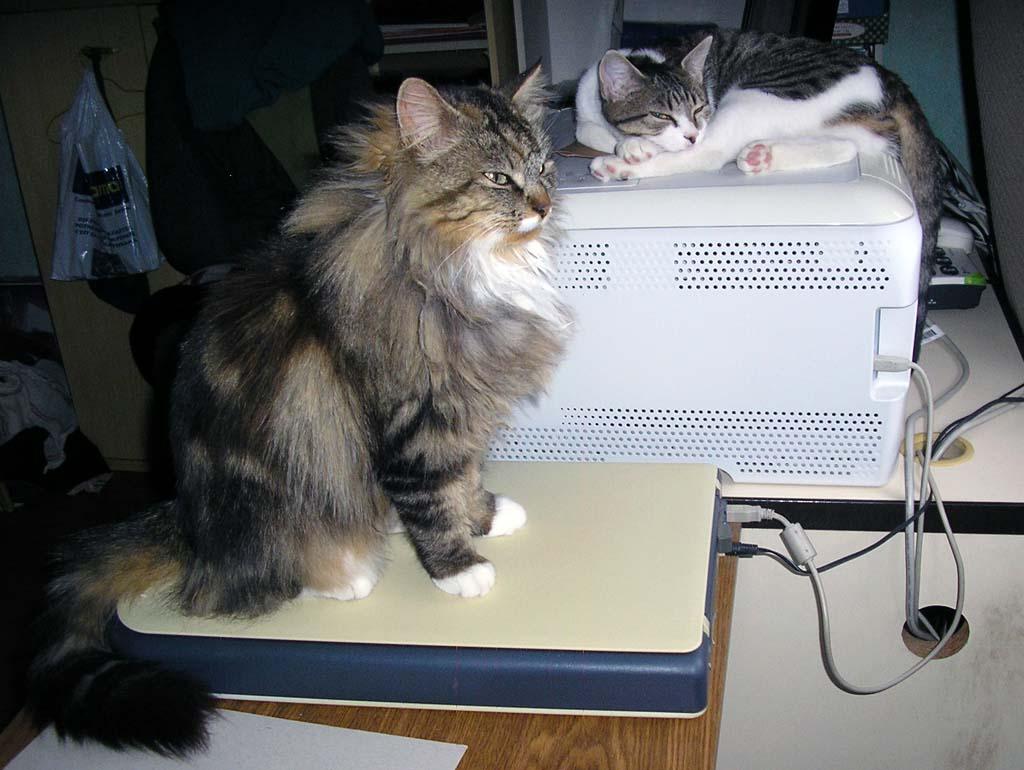 Une maison pour une petite chatte Mousti10