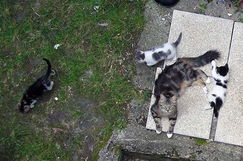 Une maison pour une petite chatte Mousti21