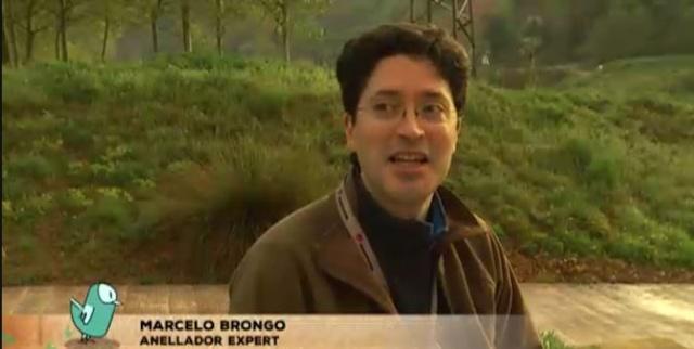 Joyeux Anniversaire, cher Marcelo Brongo !! Marcel10