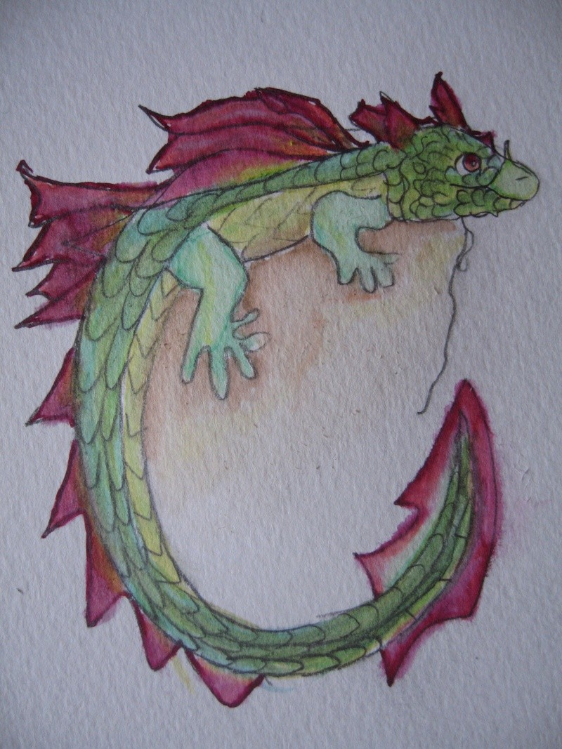 dragon (milly) Img_4810