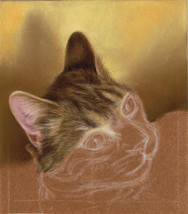 Portrait de chat Daisy_10