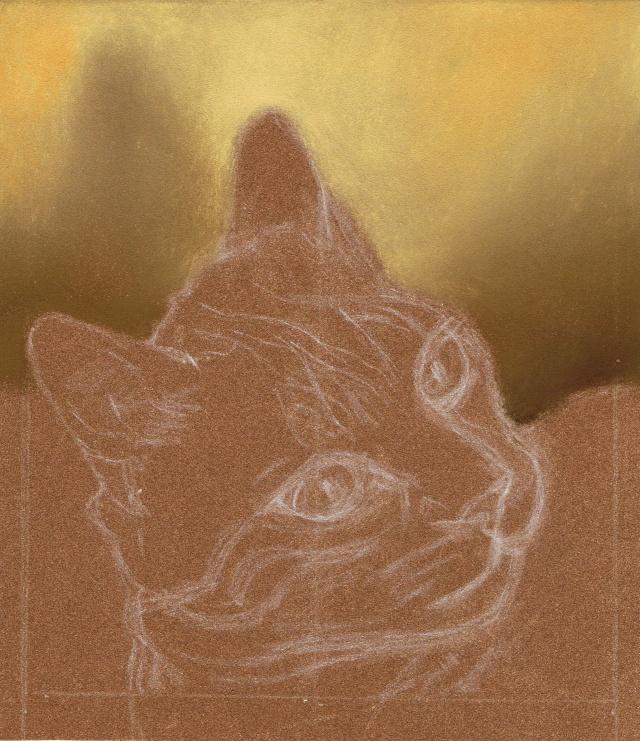 Portrait de chat Pas_a_10
