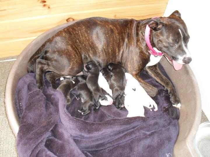 sky&her babies 15010_13
