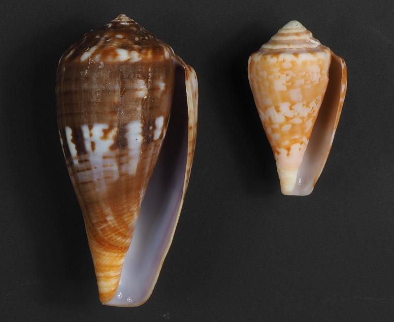 Cone à identifier P1070010