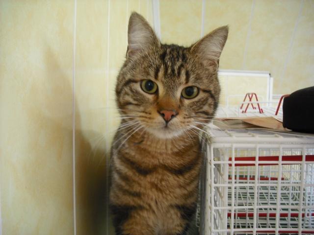 2 chats sociables d'un quartier HLM cherchent un foyer (02-Aisne) Dscf3211