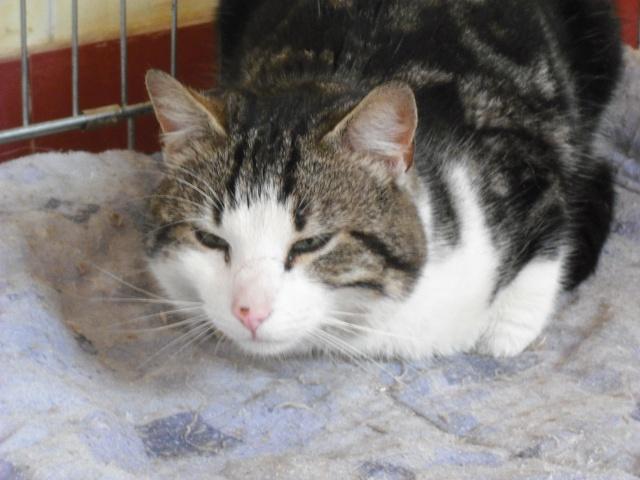 2 chats sociables d'un quartier HLM cherchent un foyer (02-Aisne) Dscf3212
