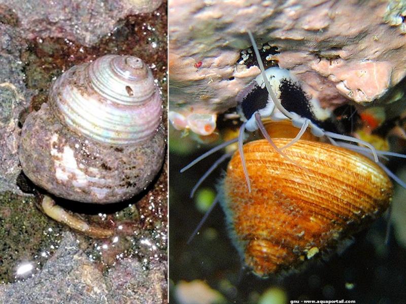 Les Escargots nuisibles   Margar10