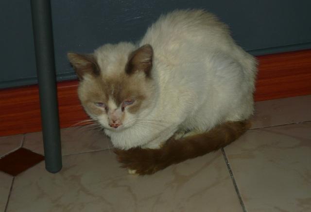Photos des chats sauvés, avant/après - Page 8 P1110812