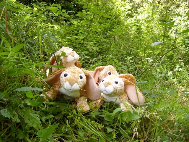 retrouver les lapins Lapino10