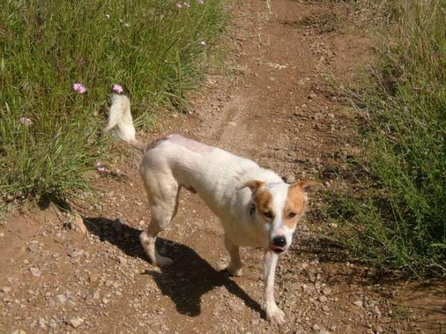 Merveilleux Yaki, 3 pattes, un des meilleurs chiens au monde, adopté en 2011 Danemark Dscf9210