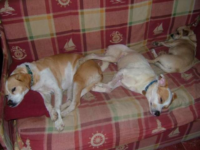 Merveilleux Yaki, 3 pattes, un des meilleurs chiens au monde, adopté en 2011 Danemark Dscf9310