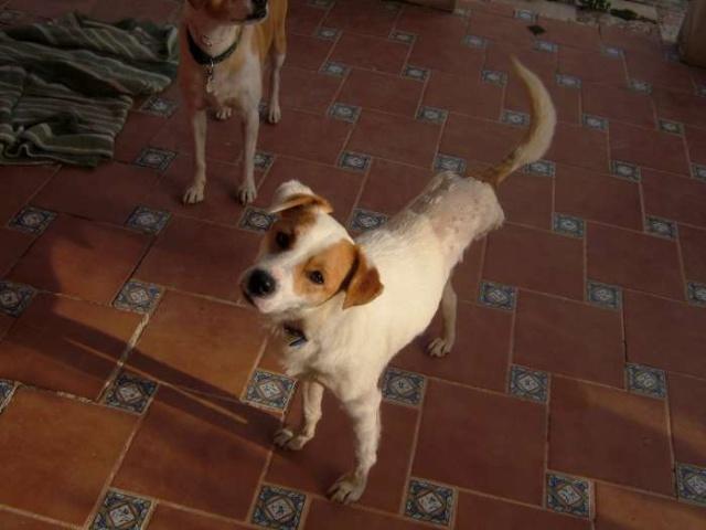 Merveilleux Yaki, 3 pattes, un des meilleurs chiens au monde, adopté en 2011 Danemark Dscf9410