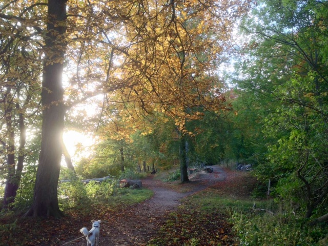 Merveilleux Yaki, 3 pattes, un des meilleurs chiens au monde, adopté en 2011 Danemark Img_3910