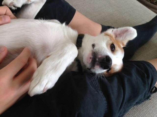 Merveilleux Yaki, 3 pattes, un des meilleurs chiens au monde, adopté en 2011 Danemark Yaki_j10