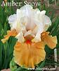 Iris 'Yes' - Blyth 1995 Ambers10
