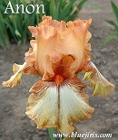 Les Iris plicata - une longue histoire et un bel exemple d'évolution Anon_g10