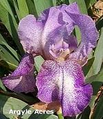 Les Iris plicata - une longue histoire et un bel exemple d'évolution Newhop10