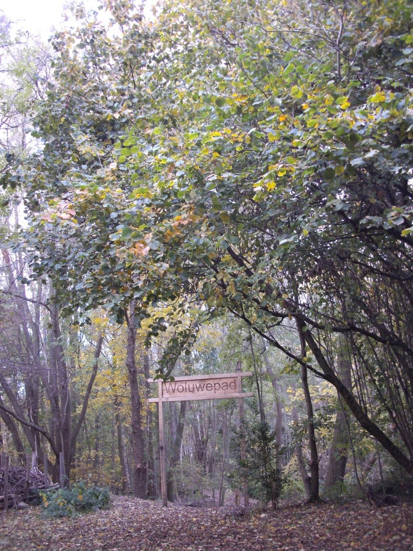 Woluwe (Vilvoorde-Sint Pieters Woluwe) Laag_k12