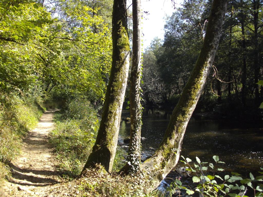 RAVeL 5 Ourthe Liege - Durbuy - Itinéraire N°7 - Sur la route des Ardennes - Page 5 Pict2426