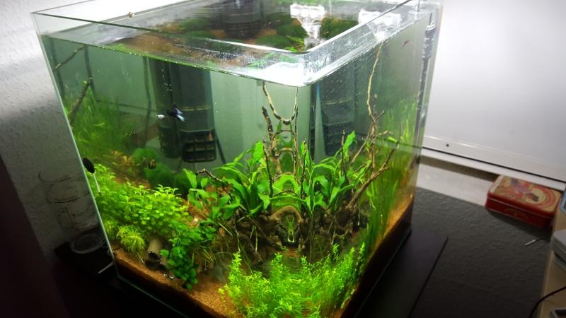 Système aquaponique (aquarium < > terrarium) 20151210