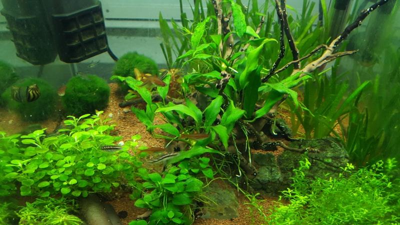 Système aquaponique (aquarium < > terrarium) 20151211