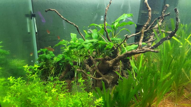 Système aquaponique (aquarium < > terrarium) 20151214