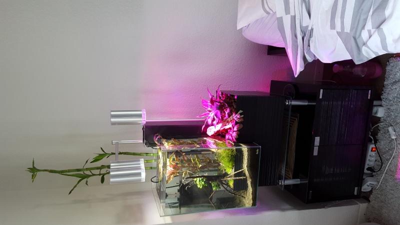 Système aquaponique (aquarium < > terrarium) 20151216