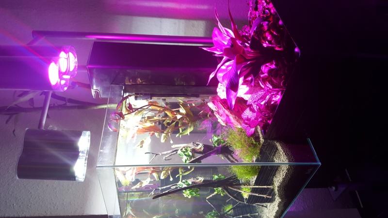 Système aquaponique (aquarium < > terrarium) 20151217