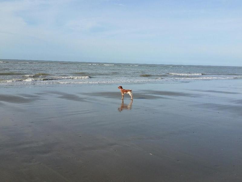 vacances en baie de Somme  Cayeux11