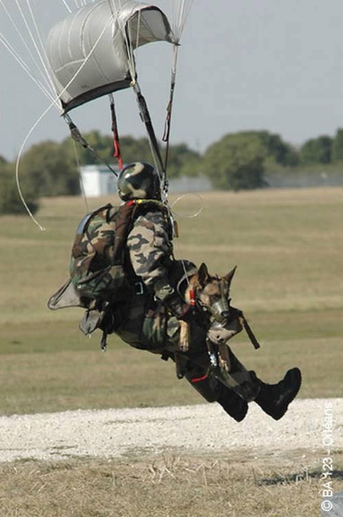 hommage à Diesel chien du RAID tué au combat  Chuteu10