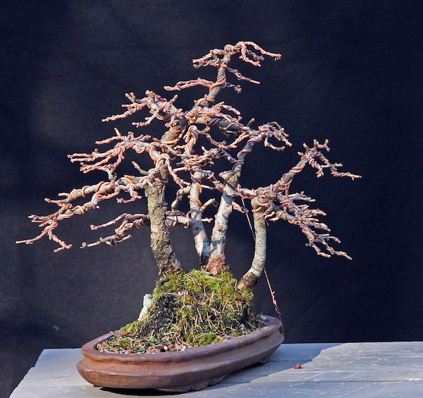Restyling an old shohin Larch group Front_10