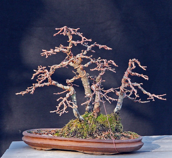 Restyling an old shohin Larch group Front_11