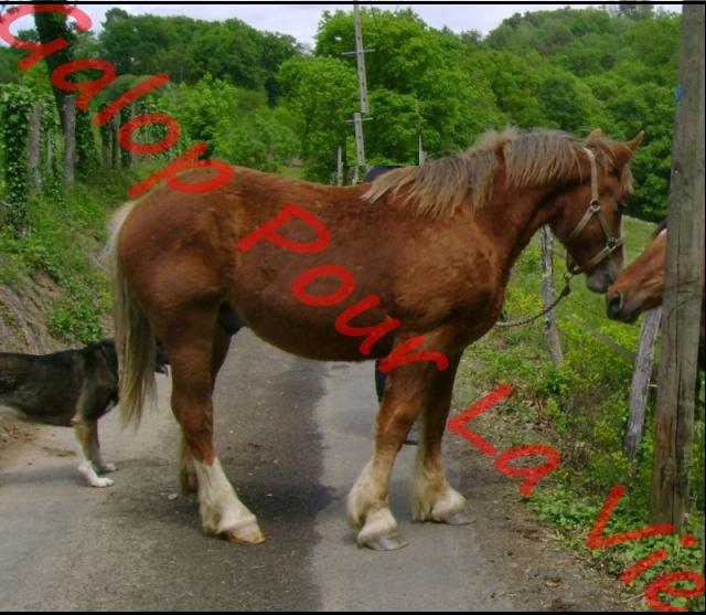 Voyou T Breton - né en 2009 - placé hors association Photo_21