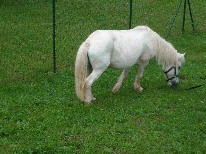 PRISCA - ONC poney typée Shetland née en 1990 - adoptée en septembre 2010 par Delphine - Page 2 Prisca14