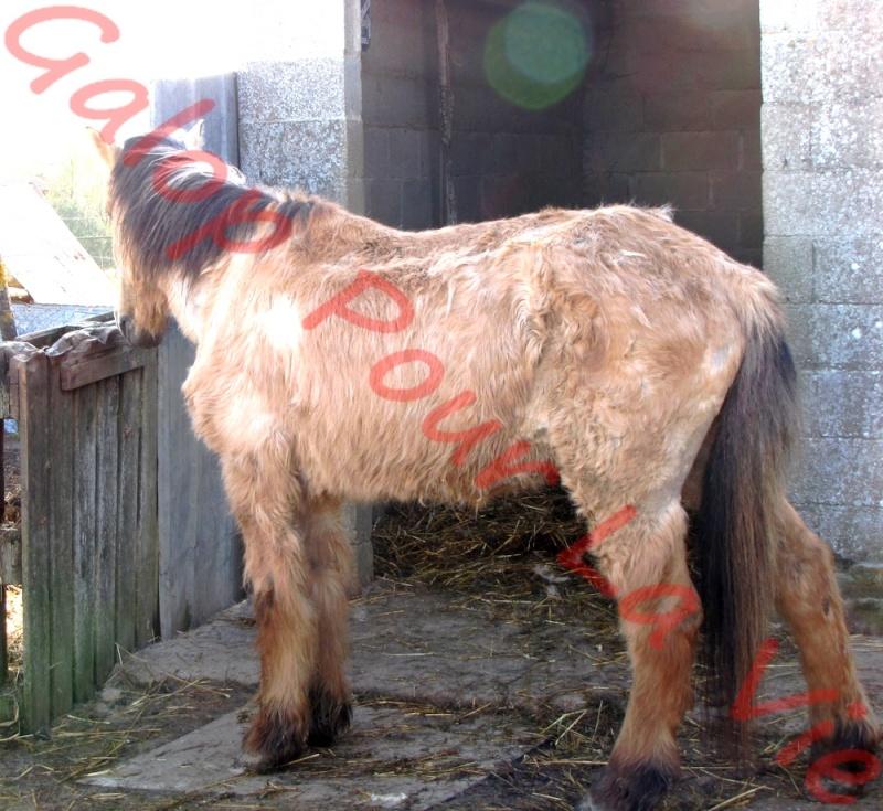 SAM - Poney typé Henson né en 1986 - adopté en septembre 2011 par Emeline Sam_gp10