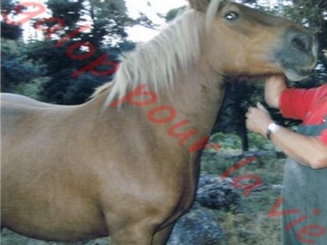 TANIA - Cheval de Trait  née en 2007- adoptée en mai 2011 par Claire Tania_10