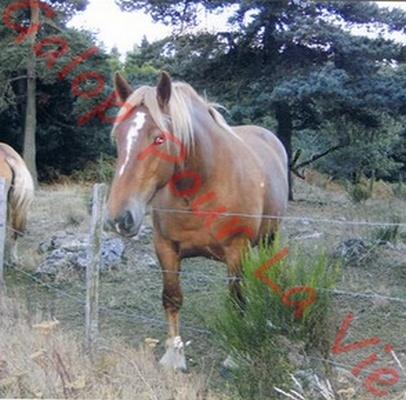 TANIA - Cheval de Trait  née en 2007- adoptée en mai 2011 par Claire Tania_11