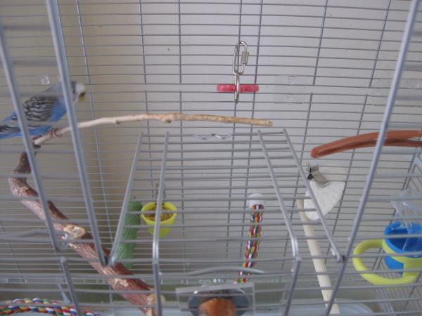 Mise en garde : conseil pour propriétaire de cage vison... Porte-16