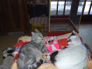 Témoignage  retour du chat 31janv14