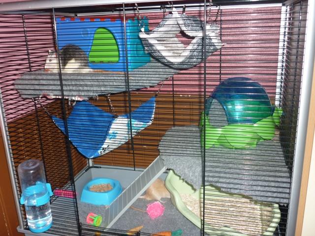 Photos de vos cages P1040813