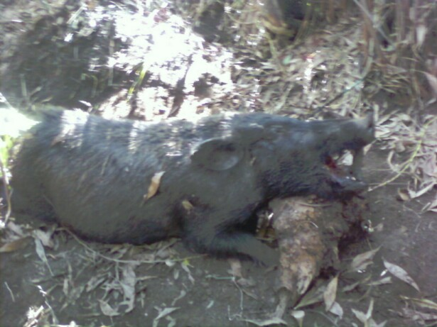 BOWHUNTING PIC GALLERY.......... - Page 10 3311